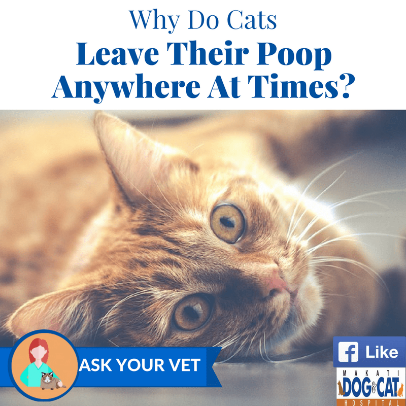 Why Do Cats Leave Poop Anywhere At Times?