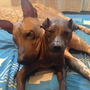 Eton and Diana: Mexican hairless