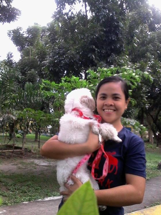 Oxy: Half maltese half poodle