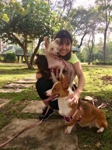 Savannah, Coraline & Georgia: Liver Shihtzu, Chinese Crested and Corgi