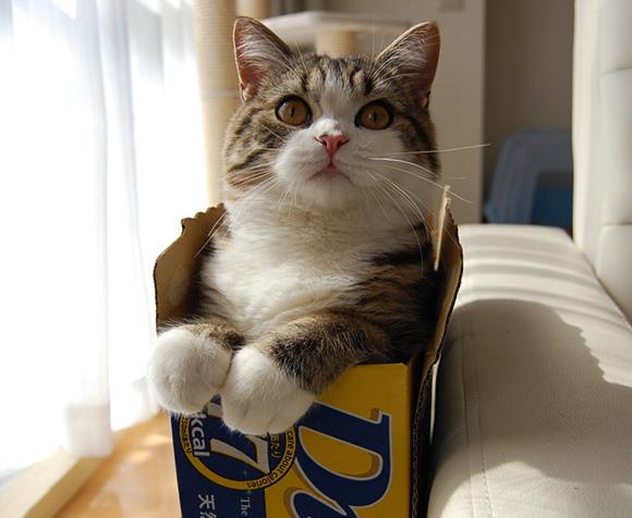 famous internet cats