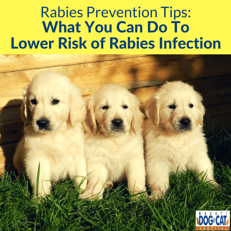 Rabies Prevention Tips: What You Can Do To Lower Risk of Rabies Infection