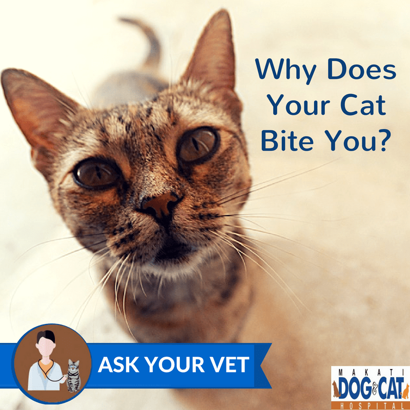 Why Does Your Cat Bite You?