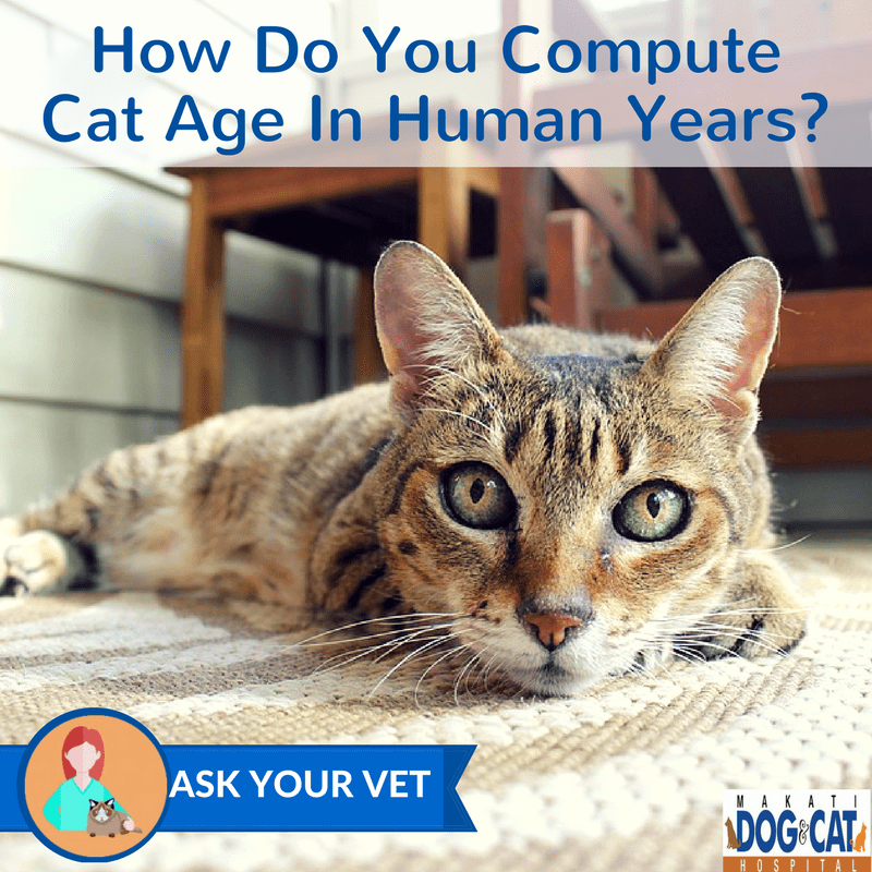 How Do You Compute Cat Age In Human Years?