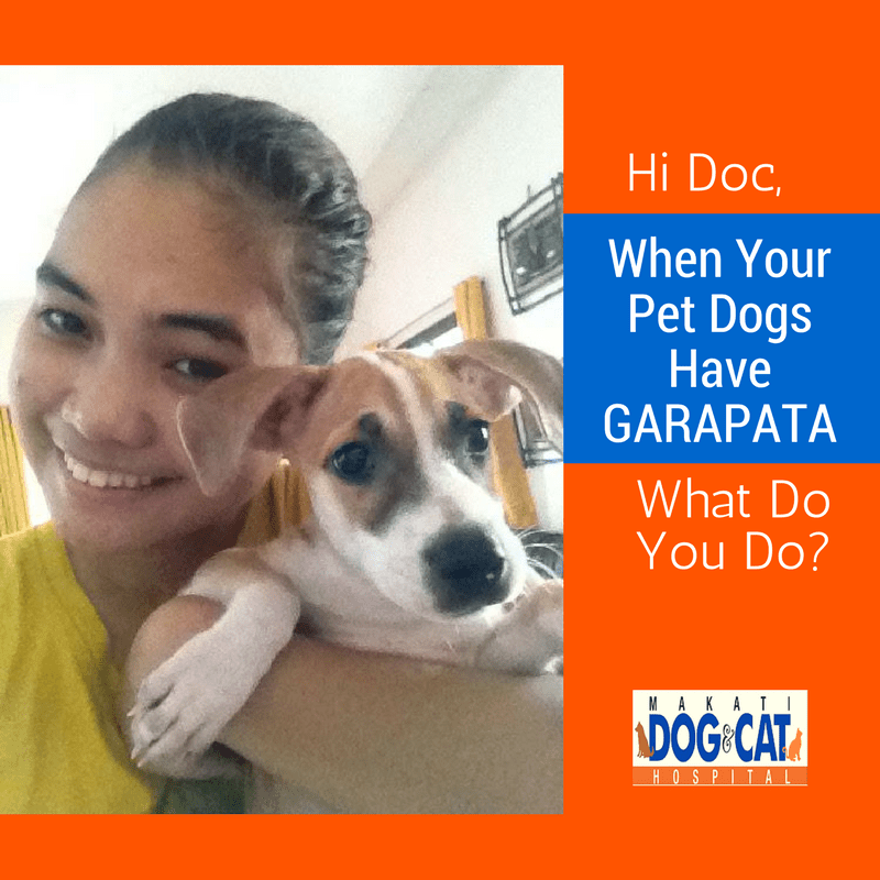 Hi Doc, When Your Pet Dogs Have GARAPATA, What Do You Do?