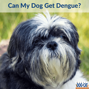 Can My Dog Get Dengue?