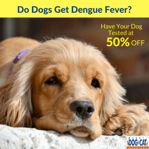 Do Dogs Get Dengue Fever?