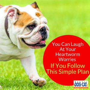 Prevent Heartworm: You Can Laugh At Your Heartworm Worries — If You Follow This Simple Plan