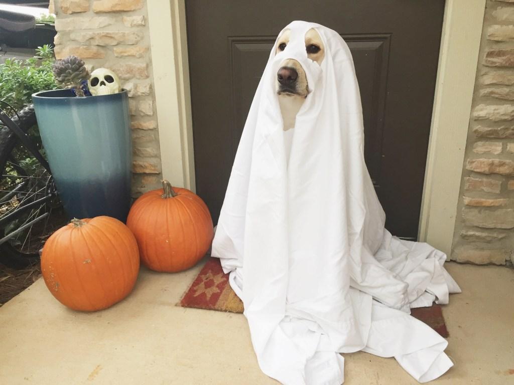 DIY Dog Halloween Costumes