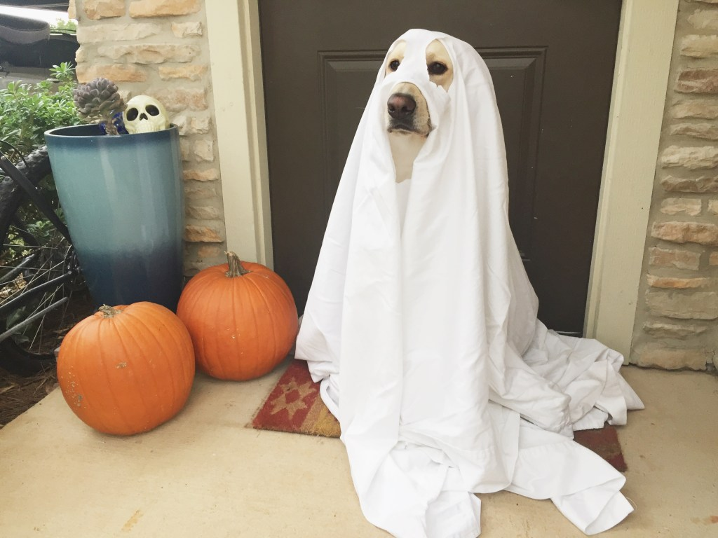 DIY Dog Halloween Costumes : dog ghost halloween costumes  - Germanpascual.Com