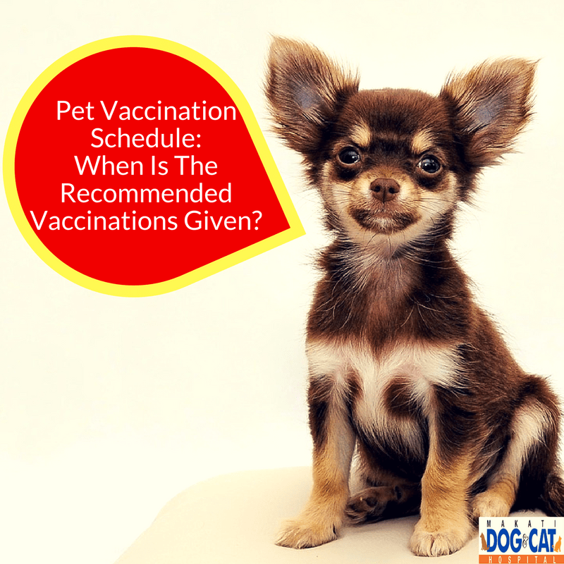 Kennel Cough Vaccine Cost >> Pet Vaccination Schedule When Is The Recommended