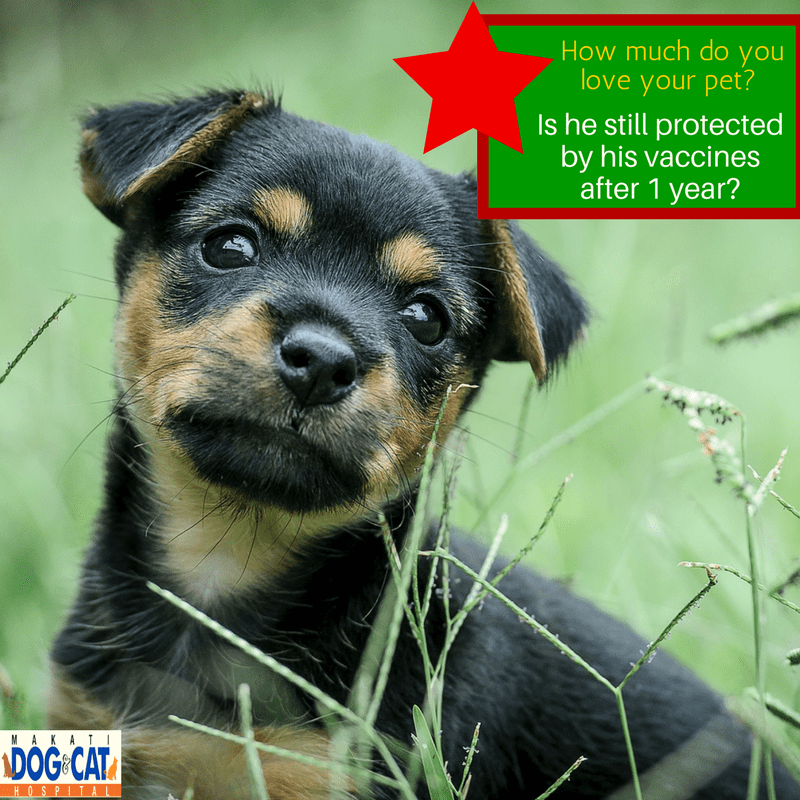 Expired Pet Vaccination Philippines: How Long Do Puppy Vaccines Really Last?
