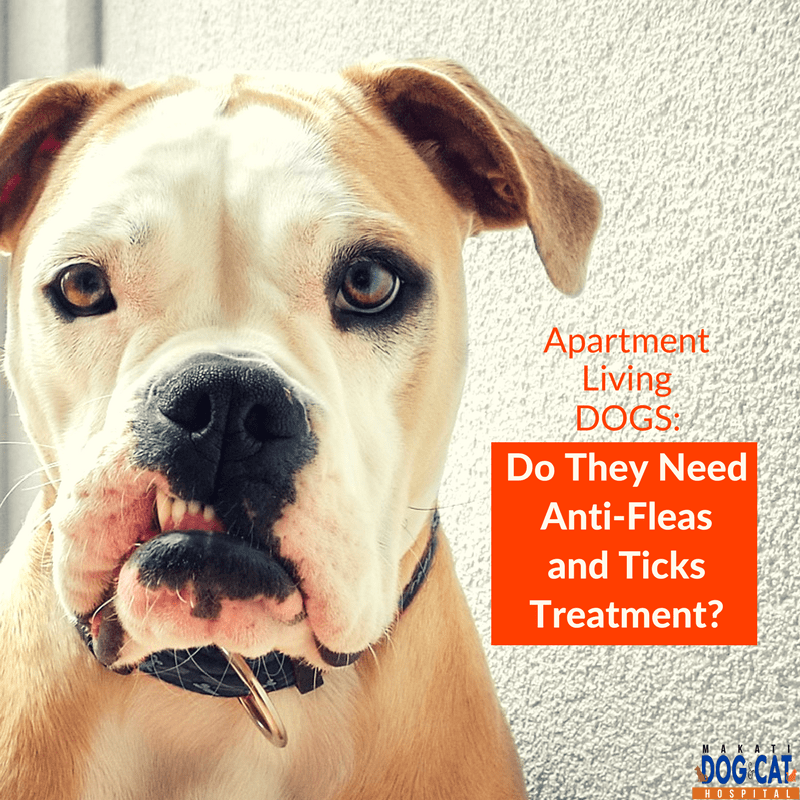 Apartment Living Dogs: Do They Need Anti-Fleas and Ticks Treatment?