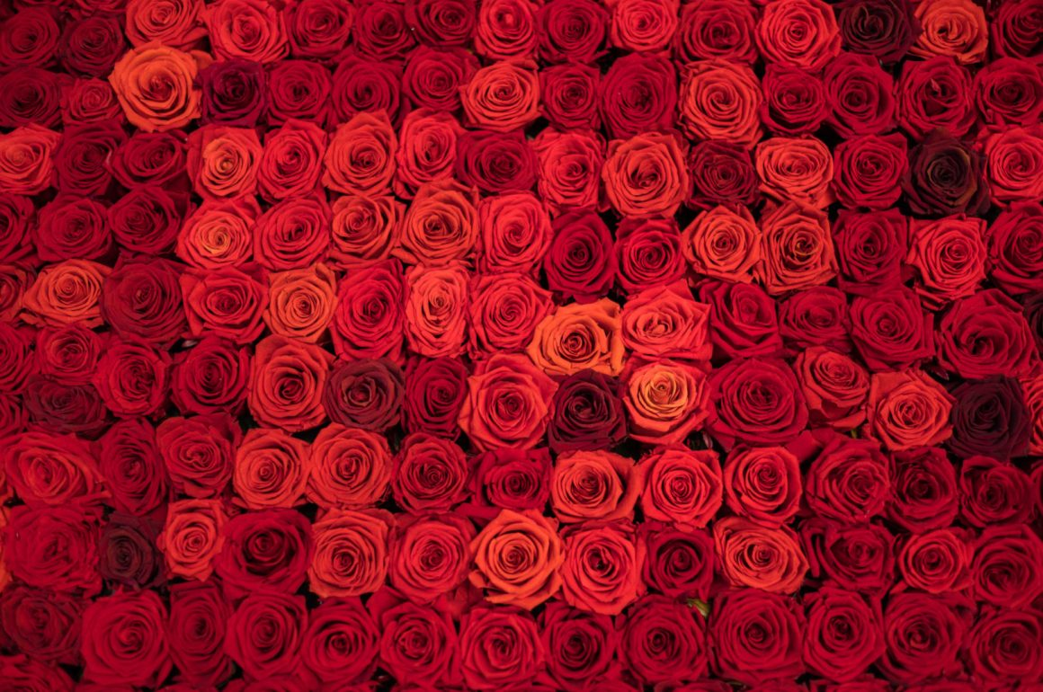ściana z wiecznych róż