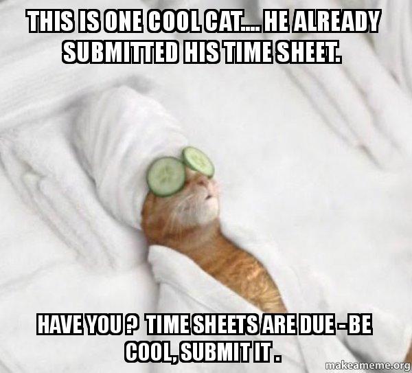 Cat Timesheet Reminder Meme