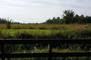 Visiting North Norfolk - Sculthorpe Moor