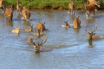 Visiting North Norfolk - Snettisham Deer Park