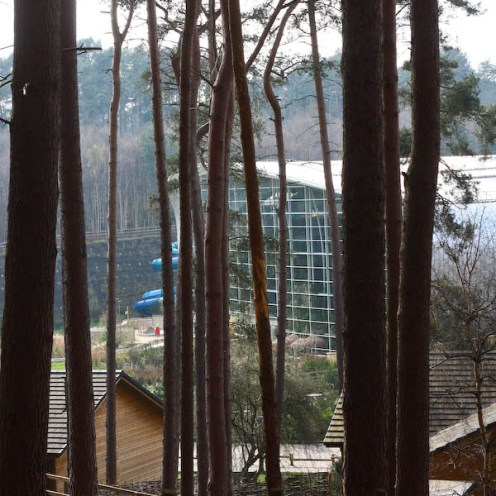 View through the forest to the Swimming pool