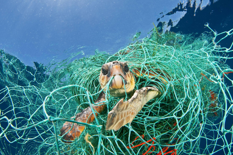 Ocean Pollution Awareness