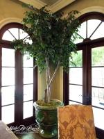 9ft Camellia Leaf Tree