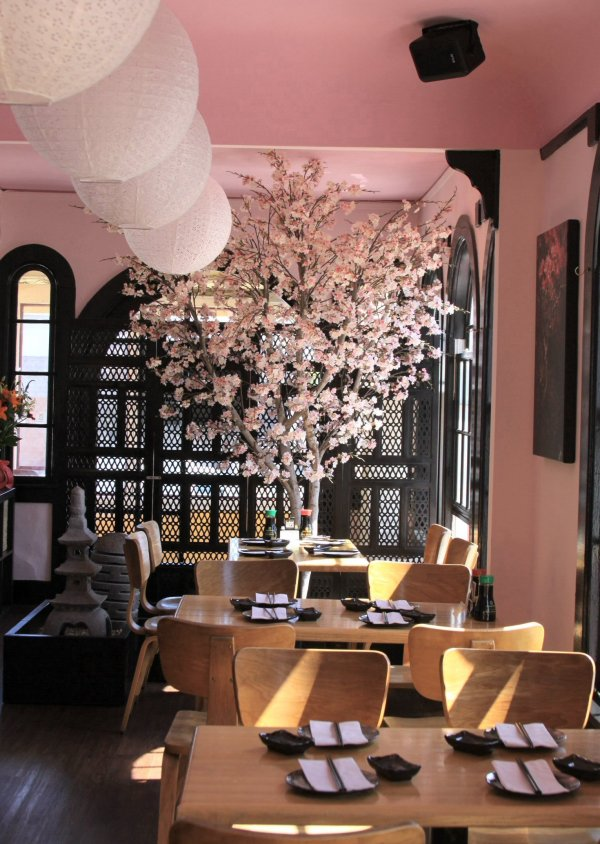 Cherry Blossom Tree in Geisha Restaurant