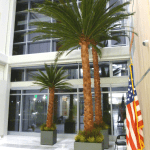 20-foot preserved palms