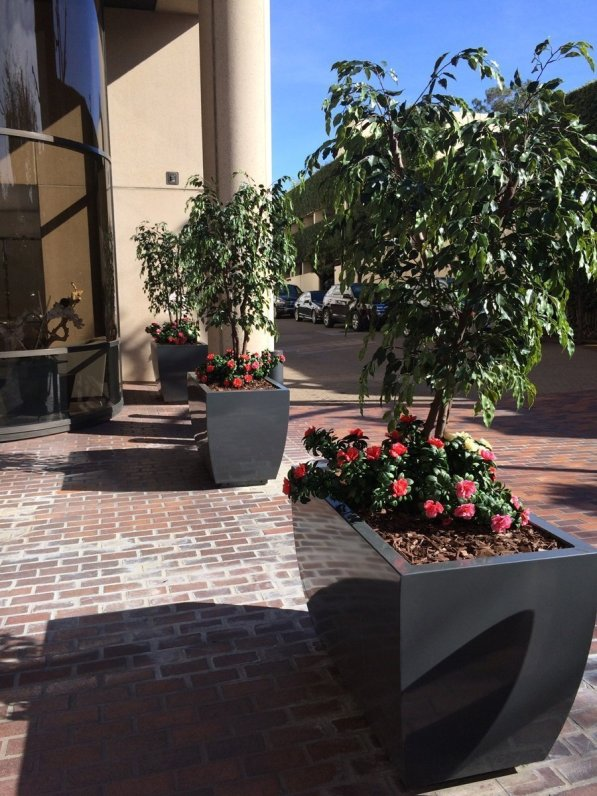 Make Be-Leaves created custom UV Ficus trees and UV Red Maple trees, with UV azaleas trailing at the base of plantings at a Beverly Hills financial building.