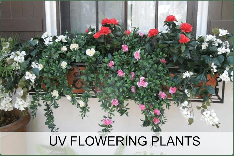 uv-flowering-plants
