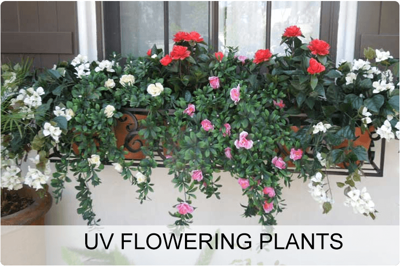 uv-flowering-plants