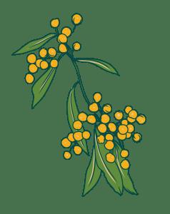 Wattle Illustration