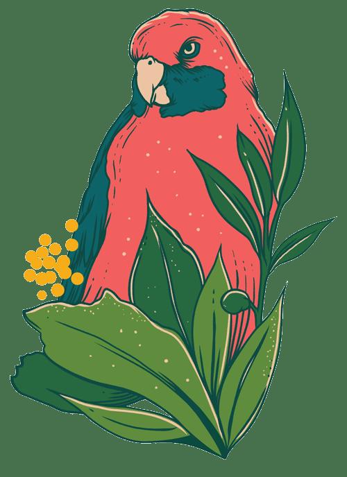 Rosella Illustration