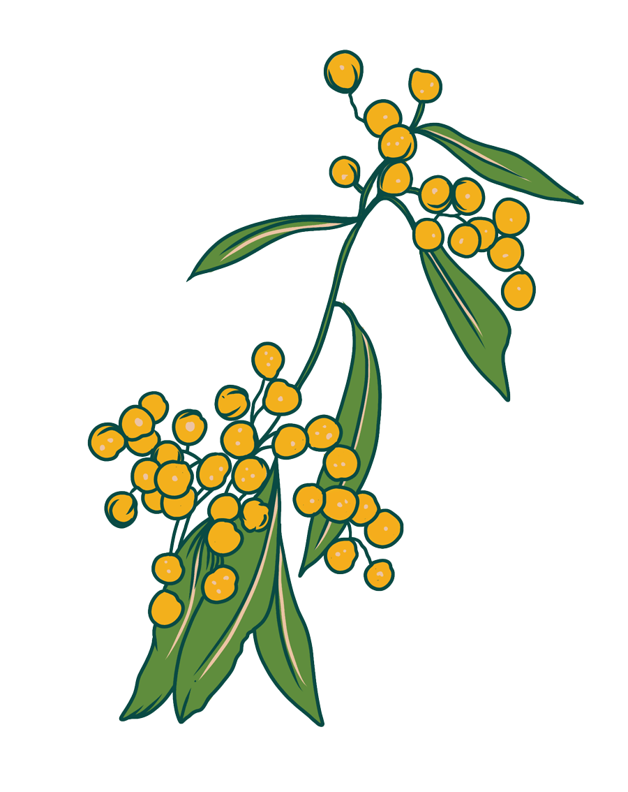 Wattle Illustration