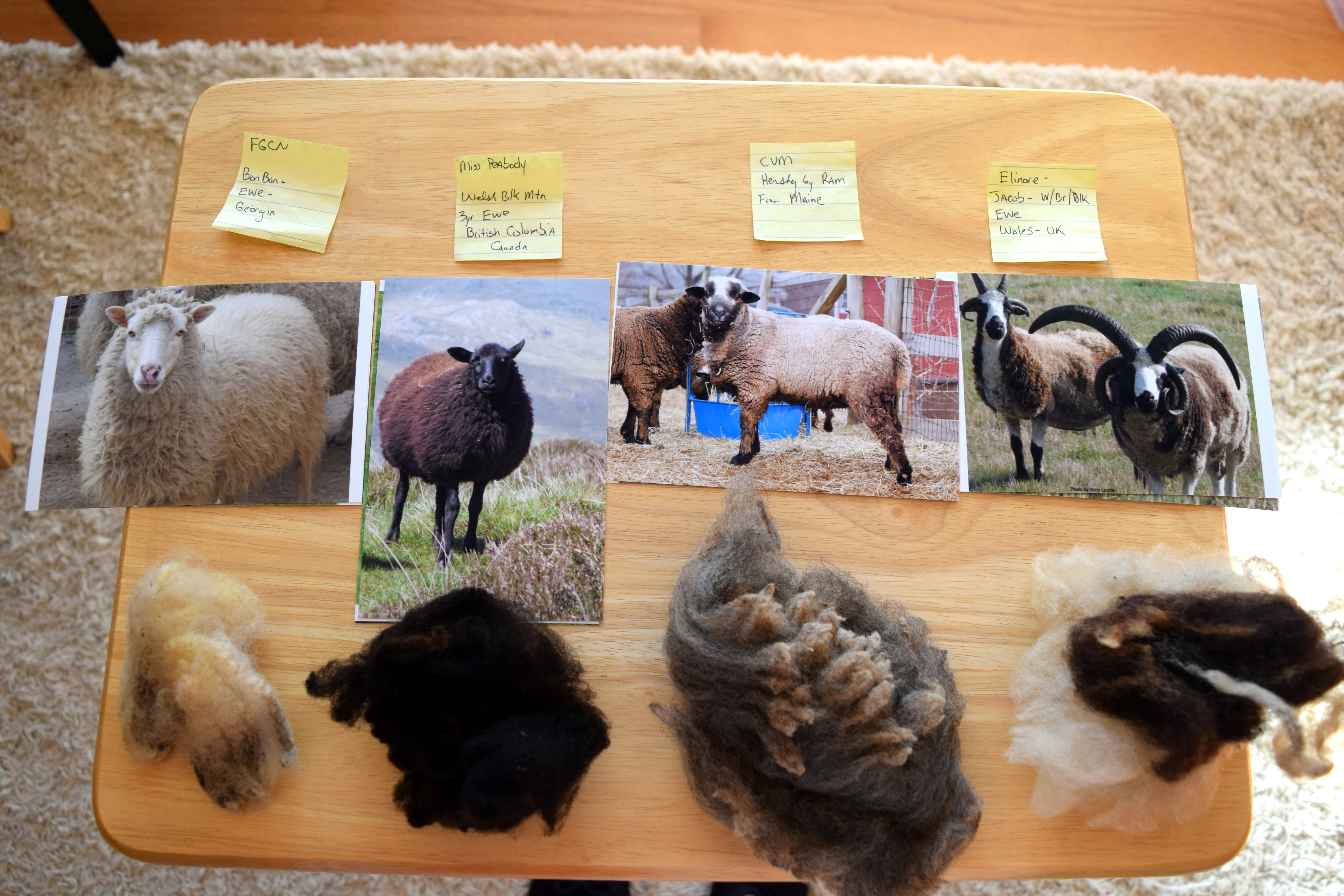Show Kids Samples Of Raw Wool From Different Breeds Sheep Little House On The