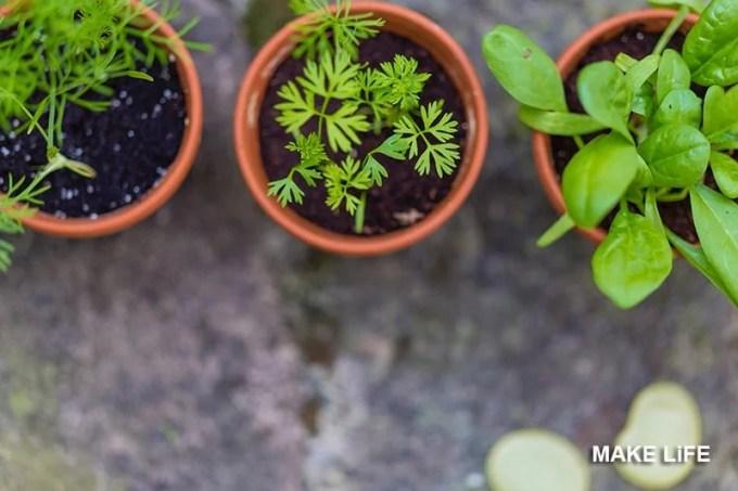 Fresh herbs in your kitchen - Αρωματικά φυτά από τη γλάστρα στο πιάτο σας