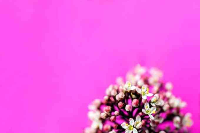Φουξ Επιφάνεια Λουλούδια