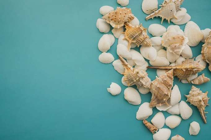 Κοχύλια Λευκά σε Γαλάζιο φόντο