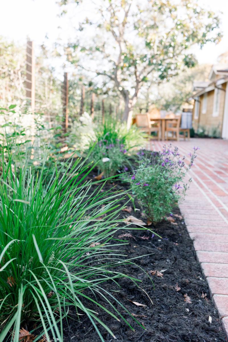 Newly planted garden border