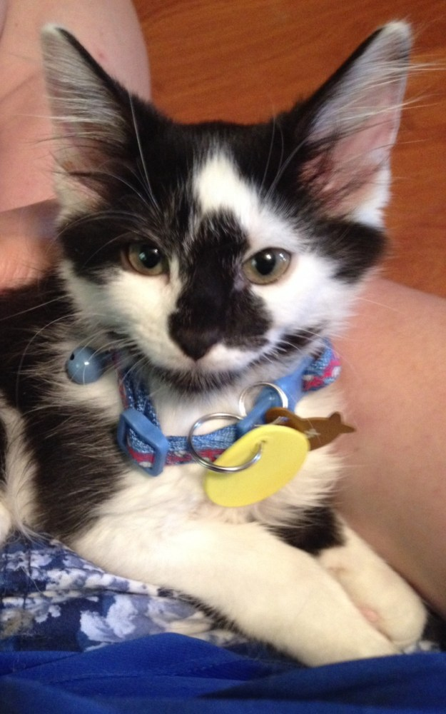3 Ways Kittens Are Like Human Babies (2/6)