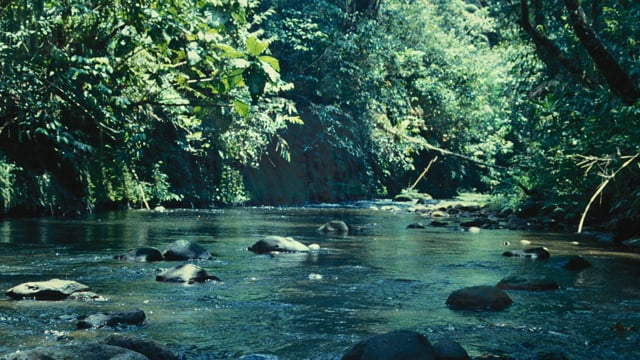 Voices of the Rainforest, A Day in the Life of Bosavi Demo