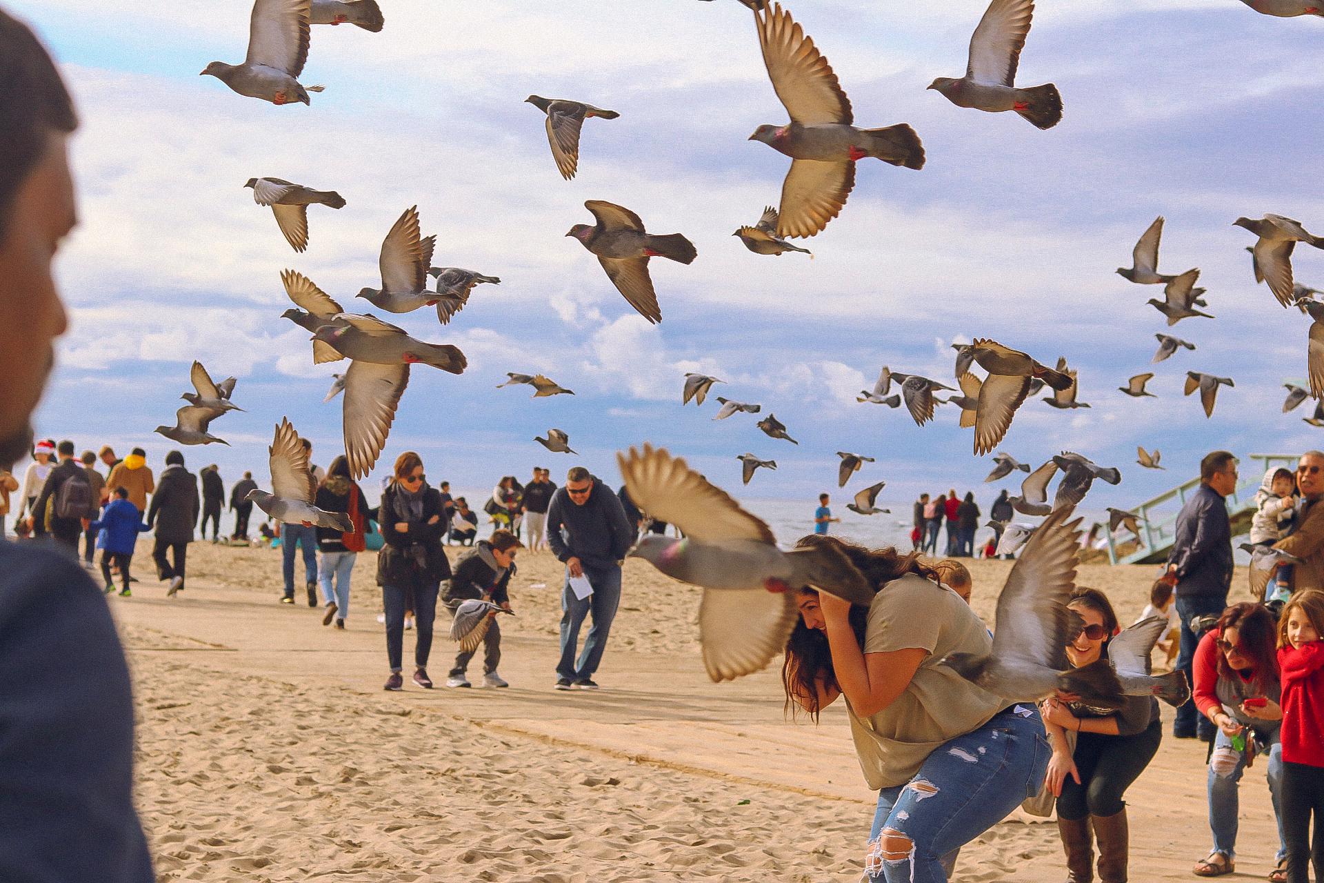 Birds swarming beachgoers, Los Angeles