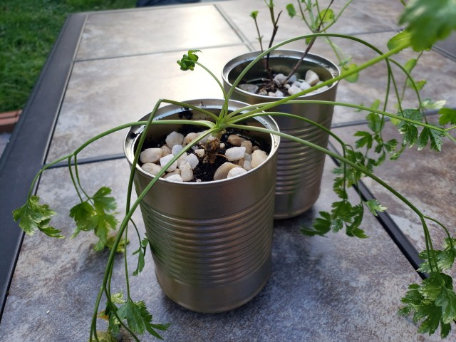 homemade planters from old tin cans