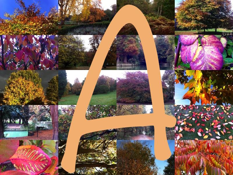Alphabet Gratitude: A