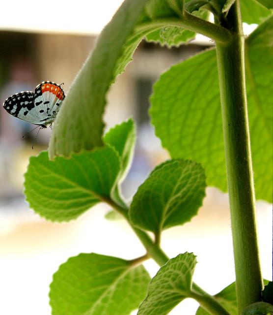 Butterfly In My Balcony: Rainy Season