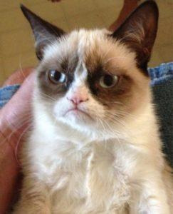 메이크업 여성 고양이