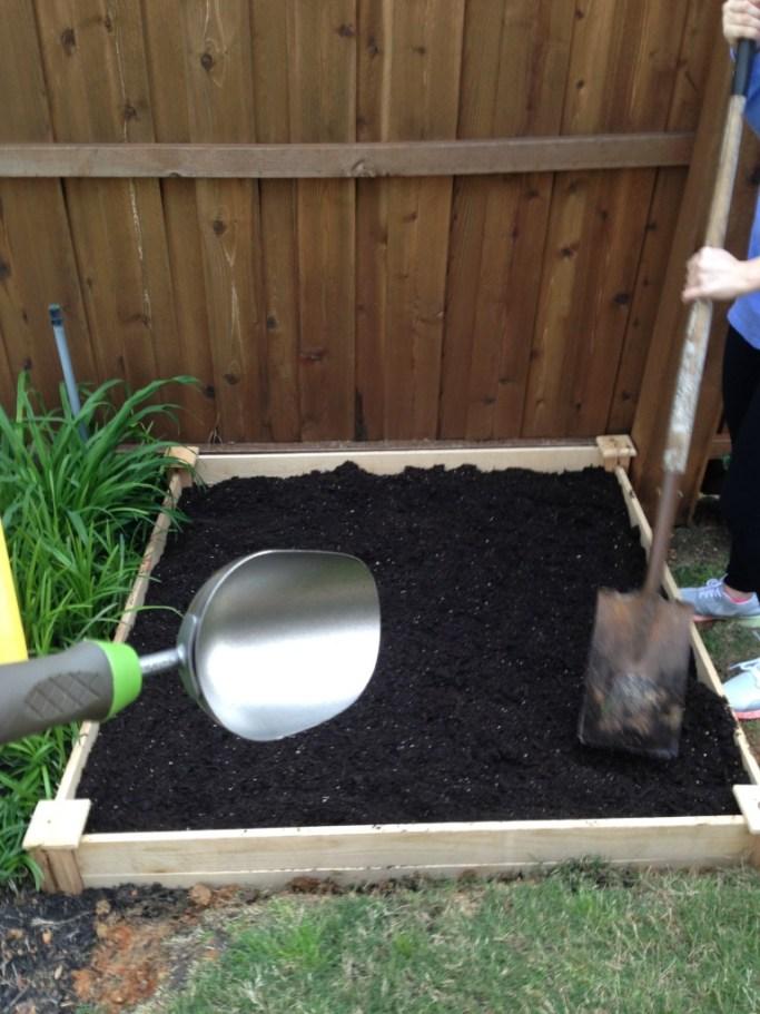 my first garden, raised garden, vegetable garden