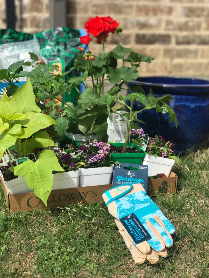 container garden tips for beginners
