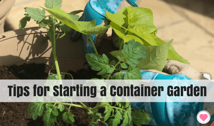 easy container garden tips