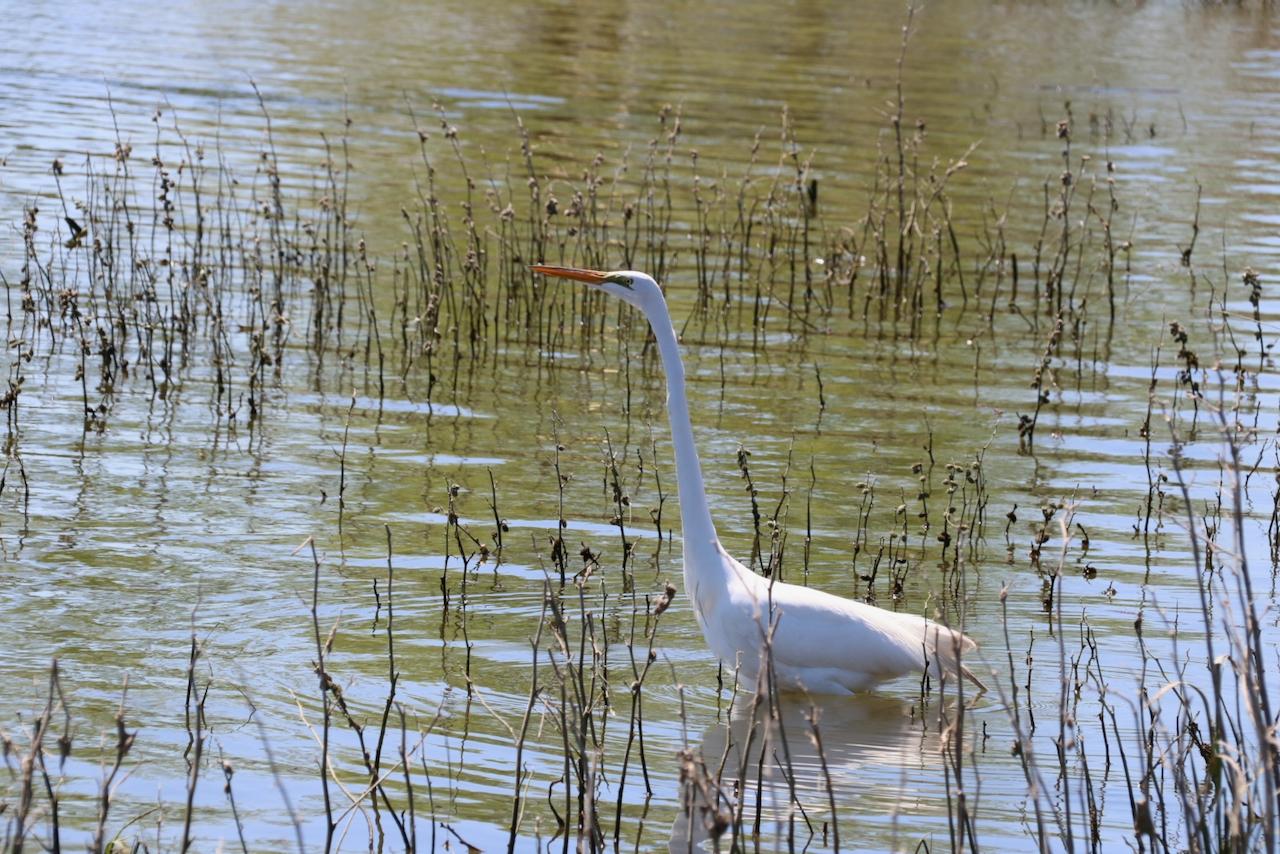 bird in water beginner photography