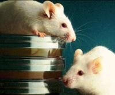 Puzzle – Kremlin orders 3,200 mice