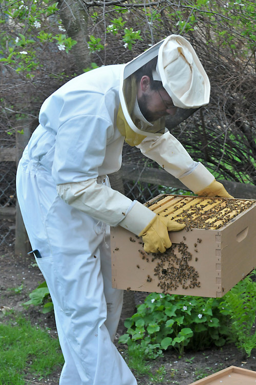 Backyard beekeeping – splitting a hive